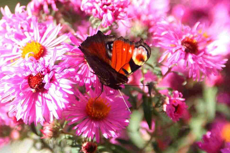 Schmetterling_klein.jpg